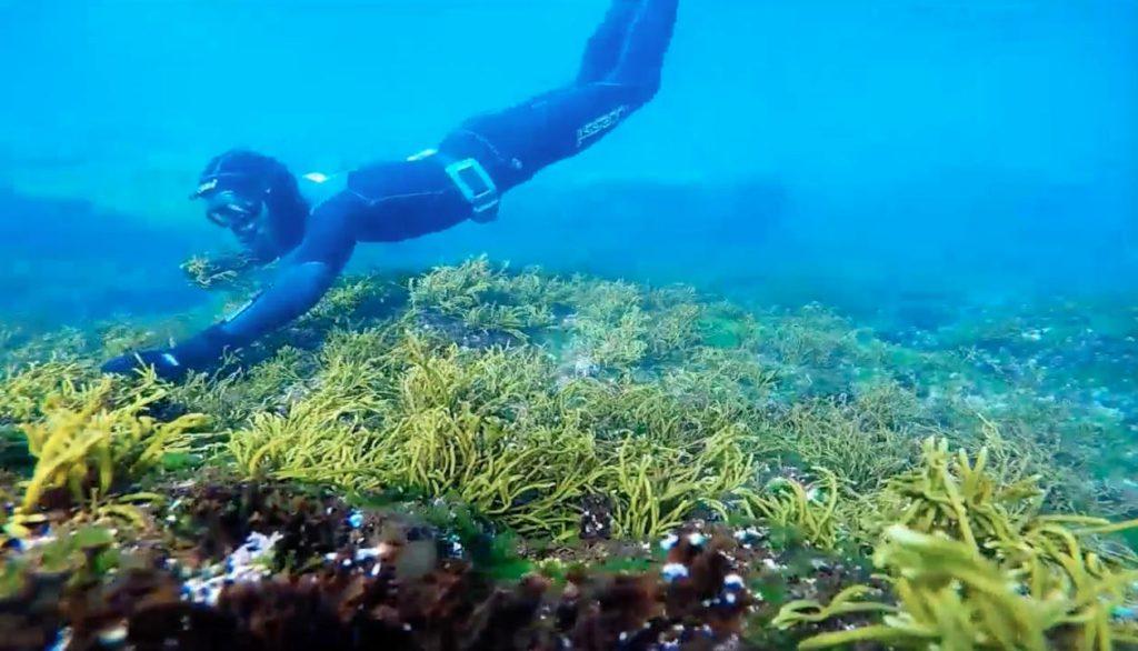 beauty, belleza, marine, algas, natural cosmetic, organic cosmetic, cosmética orgánica, salvora