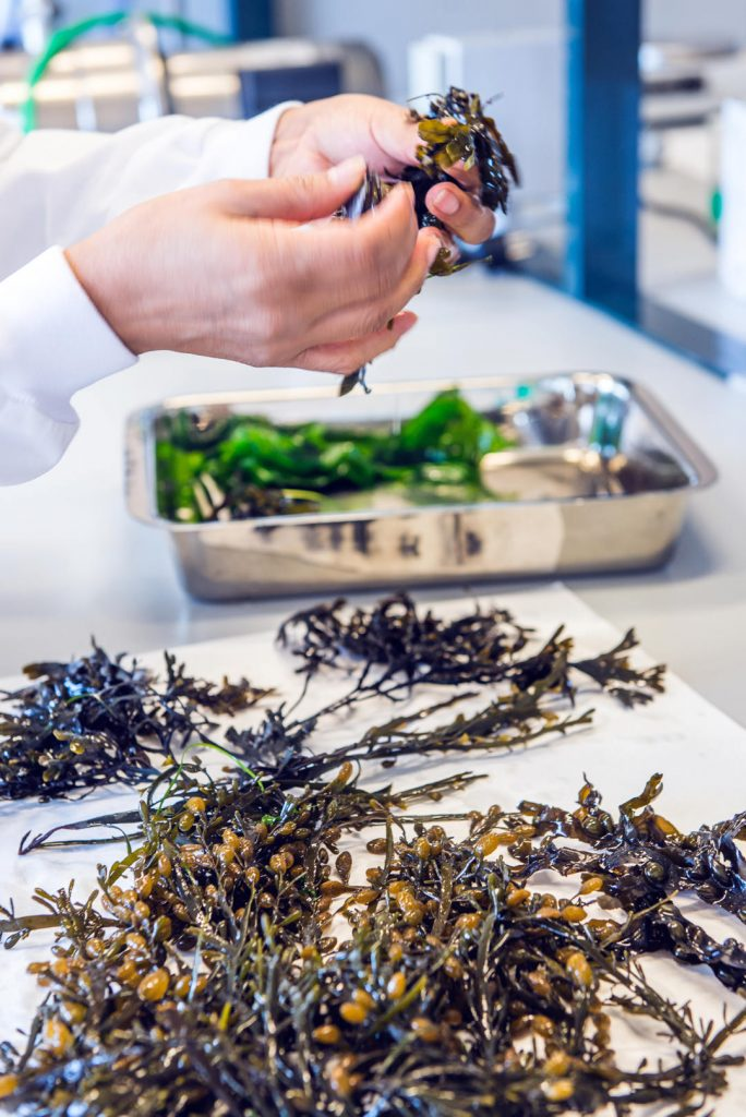 sálvora, cosmética ecológica, cosmética natural, cosmética orgánica, algas, extractos de algas, belleza natural, cosmética ecológica, revista de cosmética ecológica