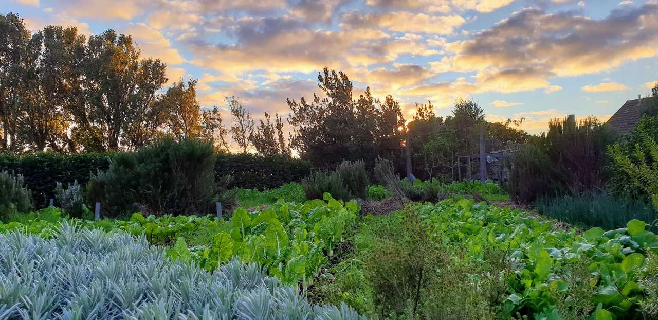 Sustainable guide, Cape Town, Sustainable lifestyle, Sustainability, South Africa, Sustainable destinations, Eco-spots, Sustainable guide Cape Town, buy local, support ethical, Sustainable living, sustainable restaurants, conscious living, Sans Community, Veld and Sea, Clarke's Diner, The Shala, Neighbourgoods Market, AKJP Studio, The Gin Bar Cape Town