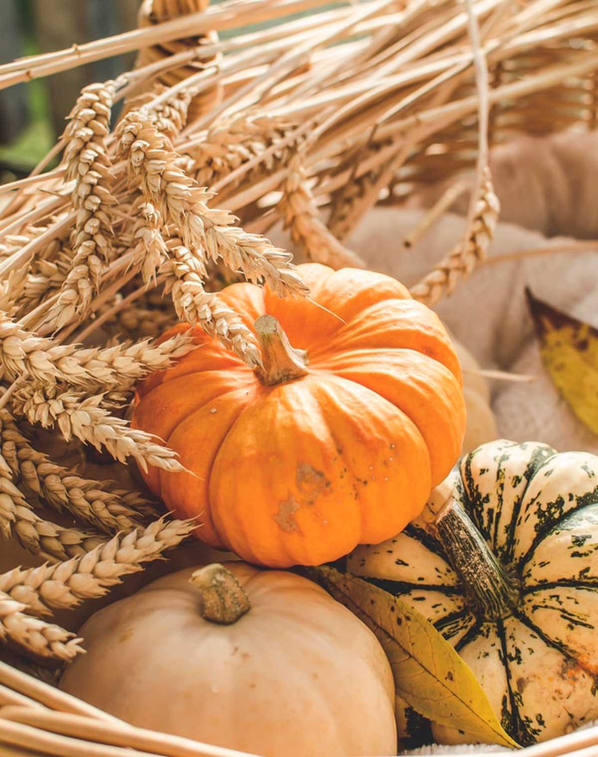 pumpkins-pumpkin-waste-loverovers-repurpose
