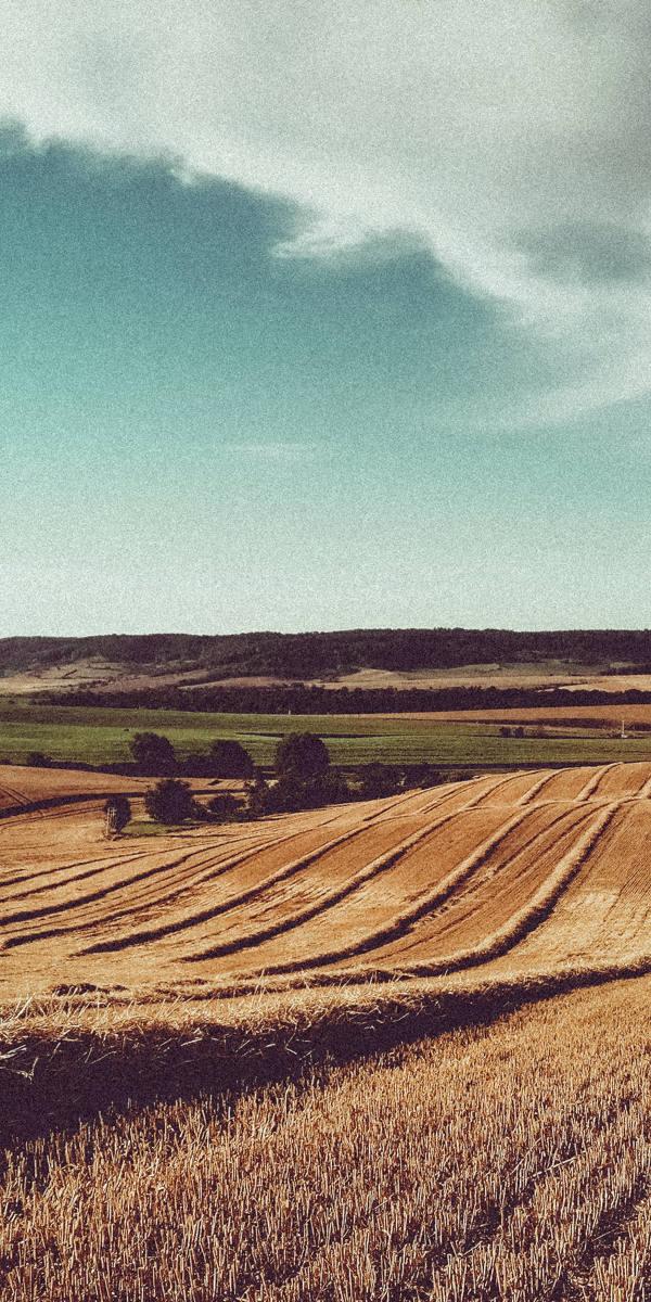 H_regenerative agriculture