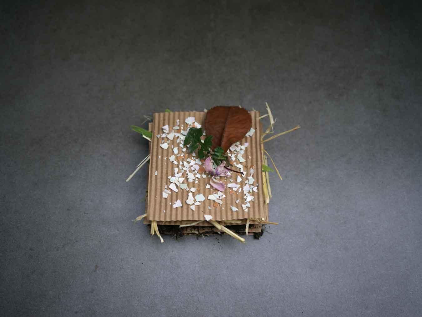 The-Poetic-of-Soil-Health_Luxiders-Magazine