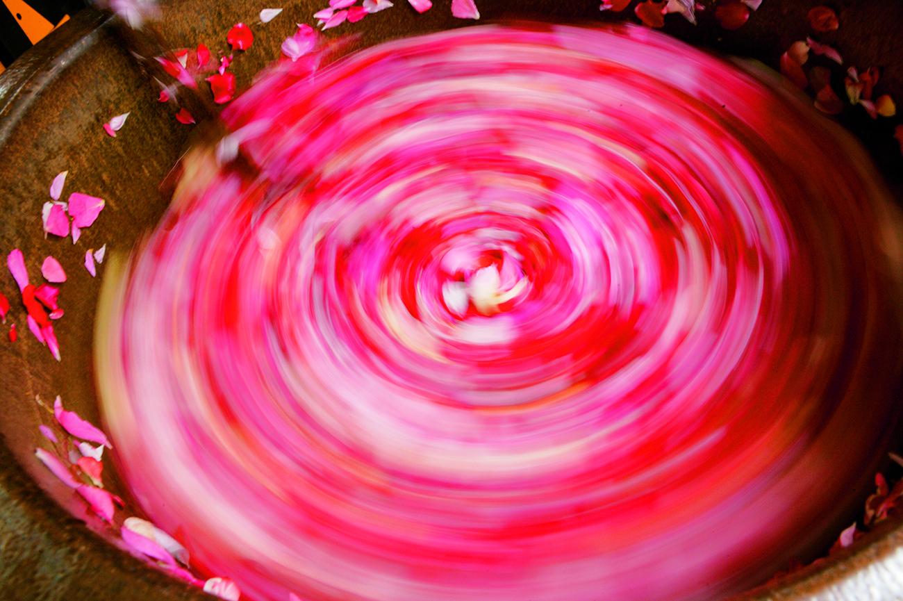 Herstellung Pflanzenlabor Verarbeitung Rosen Wirbel