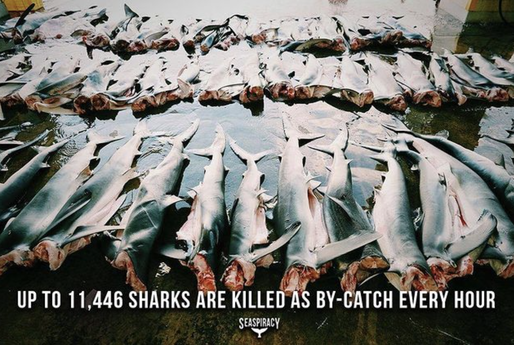 Seaspiracy, documentary movie, documentary film, Netflix, Netflix documentary, Cowspiracy, plant-based food, facts behind seafood, fishery industry, fishing industry, animal cruelty, unsustainable practice, shark killing, plastic waste, marine life, biodiversity, Ali Tarbrizi, fish market, shocking fact about fishing industry, modern slavery, climate change, sustainability issue, meatless, Blue Planet, Blue Planet Live, George Monbiot, food shortage, Eleven Madison Park
